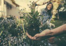 Kertek és kertészkedés