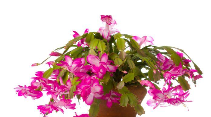A szobanövények feldobják az otthon hangulatát télen is