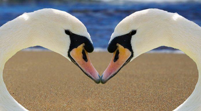 A monogámia az állatvilágban létezik