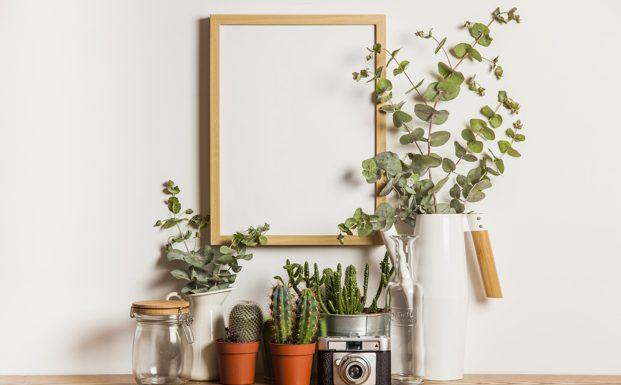 A szobanövények barátságosabbá teszik a lakást