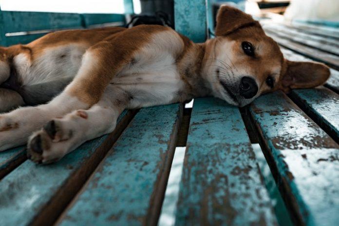 A kutya szervezete másként reagál az ember által fogyasztott ételekre