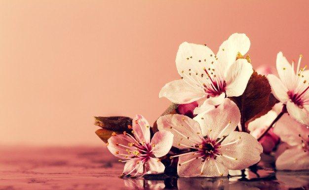 A virágvíz kevéssé ismert, ám hatásos kozmetikum