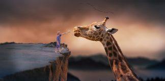 Az Erőszakmentes Kommunikáció egyik kulcsa a zsiráfnyelv