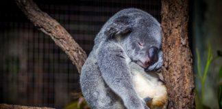 Alvás közben agyunkban sokféle folyamat zajlik