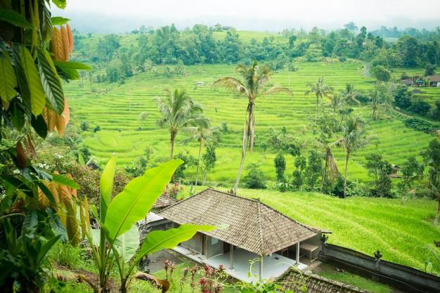 Bali rizsteraszai látványosságnak sem utolsók