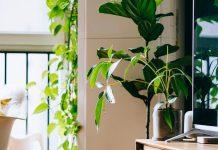 A szobanövények meghálálják a gondoskodást