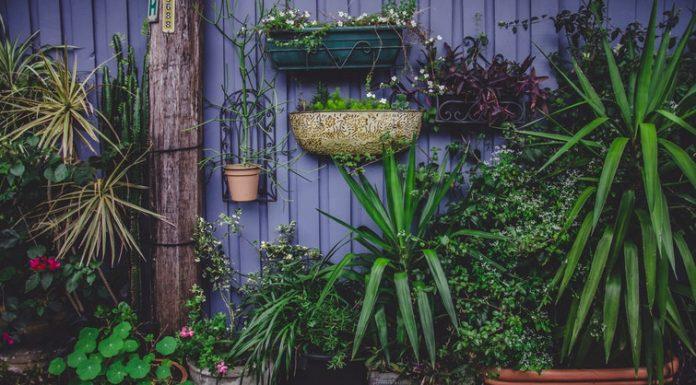 A kert egész nyáron örömforrás lehet