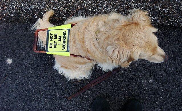 Látássérült emberek igazi társa lehet a kutya