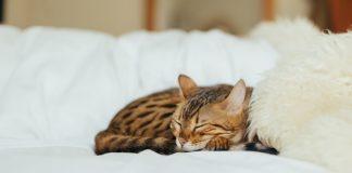 Az alvás nagymestere jócskán leköröz minket