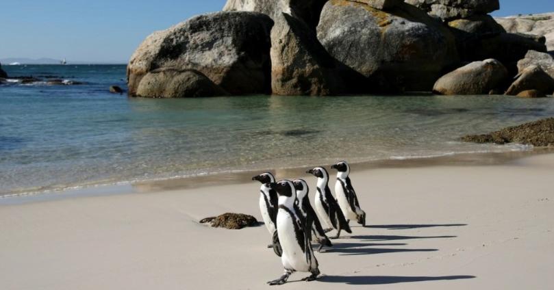 Egy igazán népszerű partszakasz - pingvineknek /boredpanda.com/