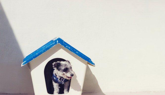 Egy luxus kutyaház talán csak a gazdinak az