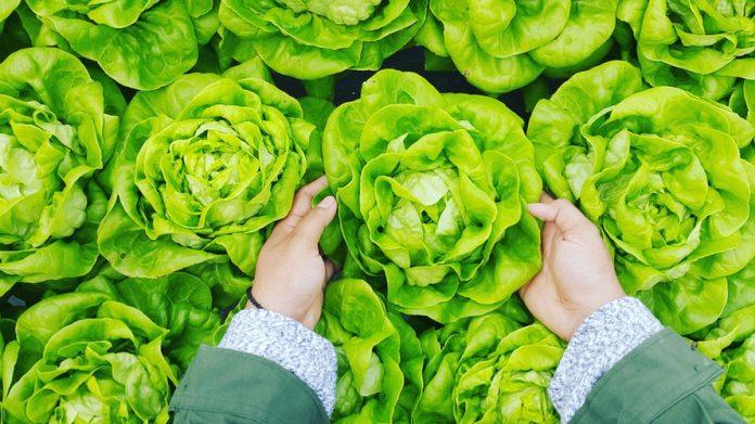 A fenntartható életmód sarkalatos pontja az étkezés