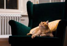 A bútor csere időpontját a rendszeres használat befolyásolja