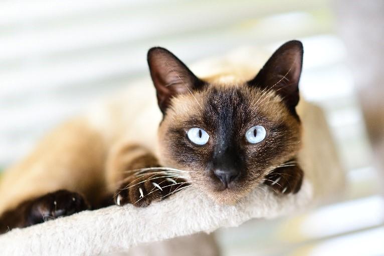 Macska, a hazikedvenc