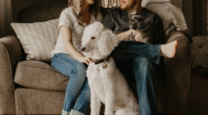 A kutya-macska barátság fontos egy családban