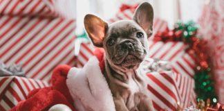 Hogy miért szeretjük a karácsonyt? Például a dekorációért.