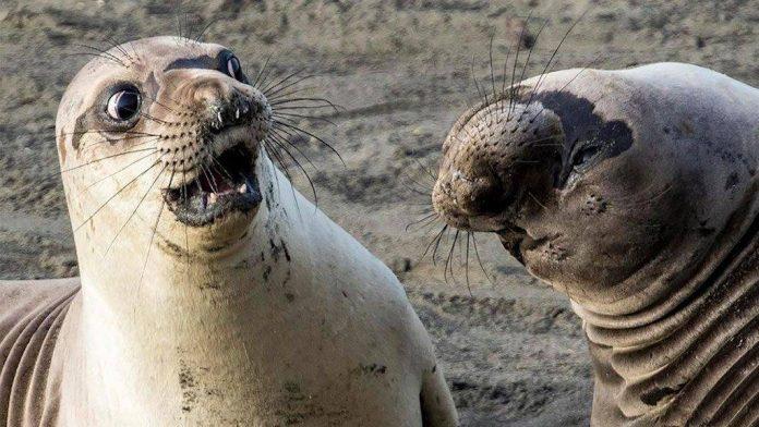 A vicces állatfotók minden évben megmérettetnek