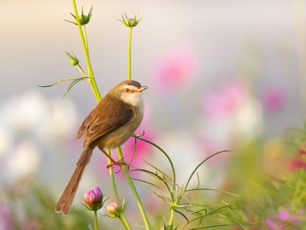 A kertészkedős appok a madarak felismerésében is jók lehetnek