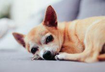 Az állatszőr allergia enyhítésére is vannak megoldások
