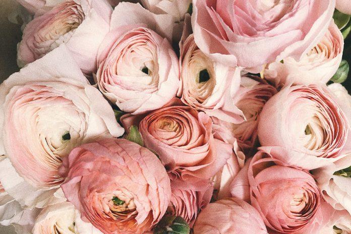 A rózsavíz hatása csodákat tesz a bőrrel.