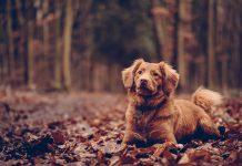 A kutya örökbefogadás pozitív egészségügyi hatásokkal bír
