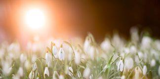 tavaszi megújulás kívül és belül tippjeinkkel