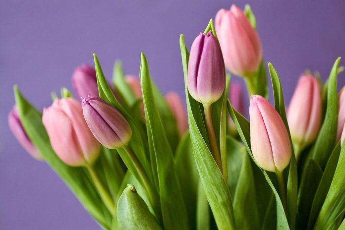 Tavaszi virágok az otthonodba - tulipán