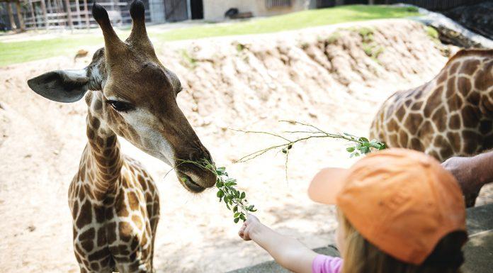 A legszebb vadasparkok, állatkertek országszerte